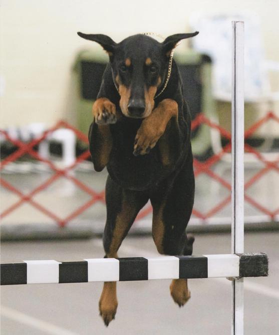 Dog Training Classes Northern Va