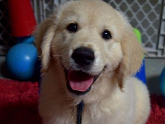 Dog Training Beaufort Nc