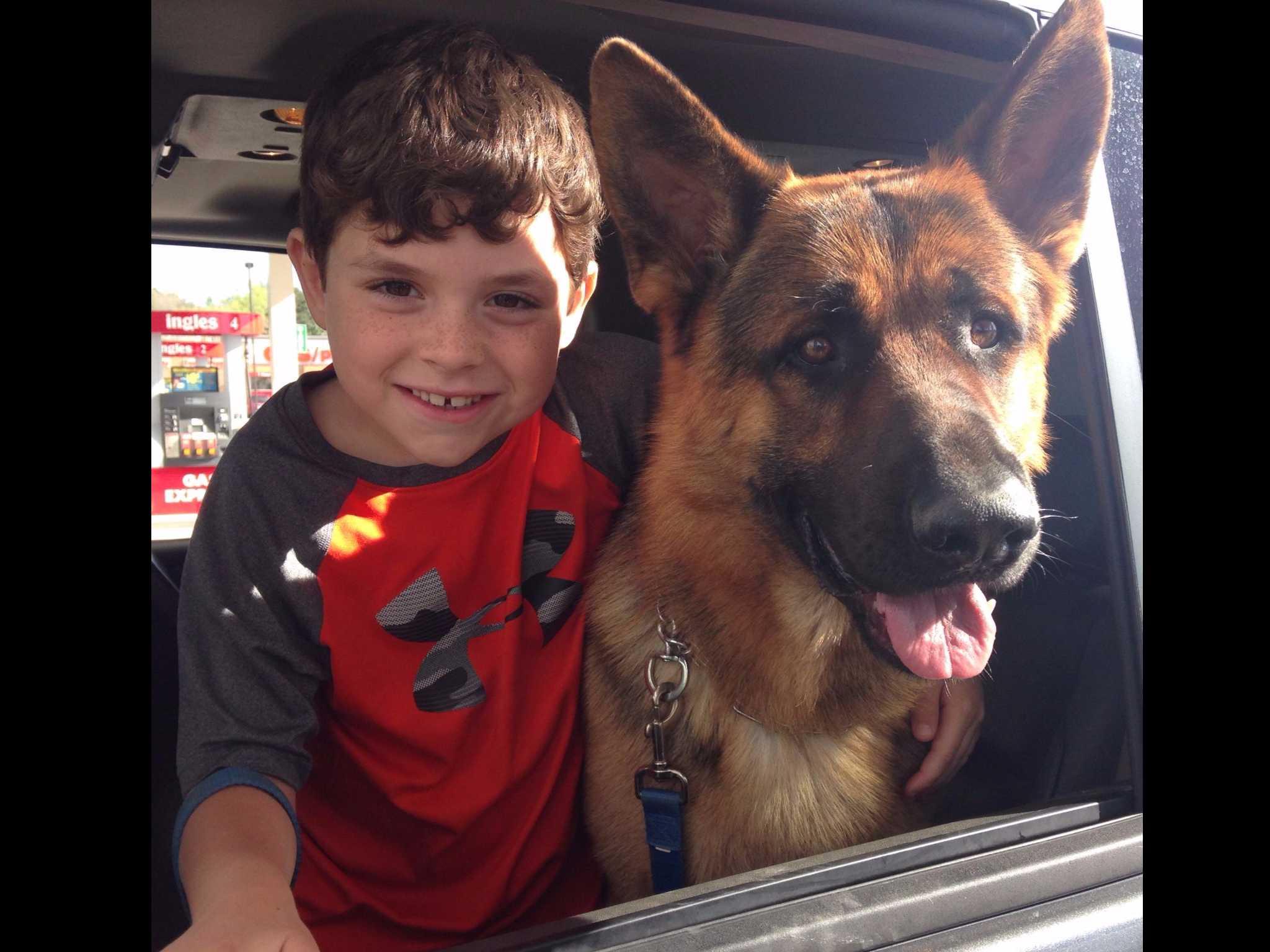 Appleridge German Shepherds - Dog Breeders - Griffin, GA
