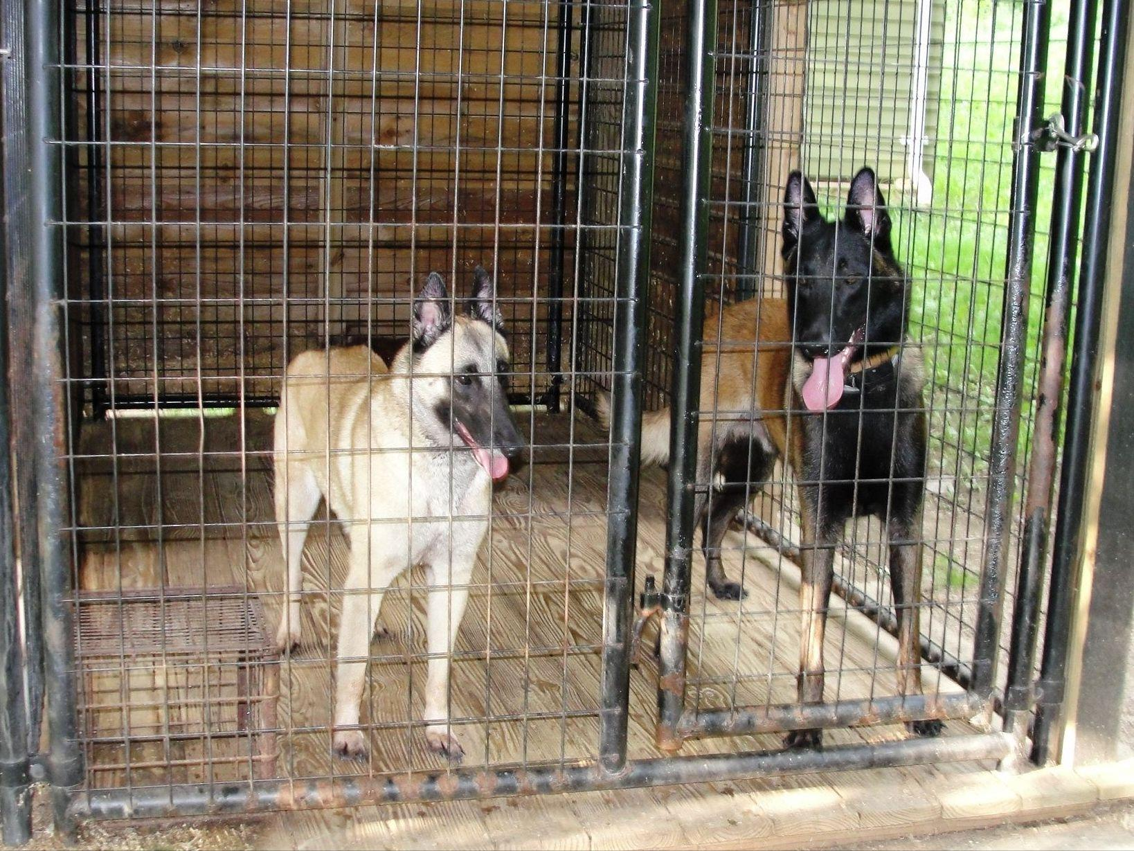 Dog Parks In Waldorf Maryland