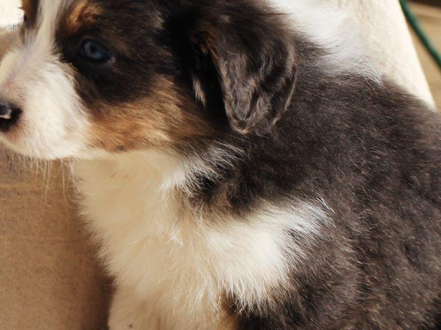 Orland Park Dog Registration