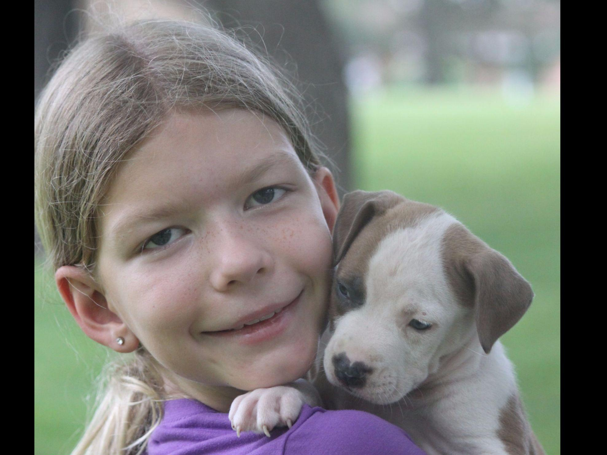 American Staffordshire Terriers puppies