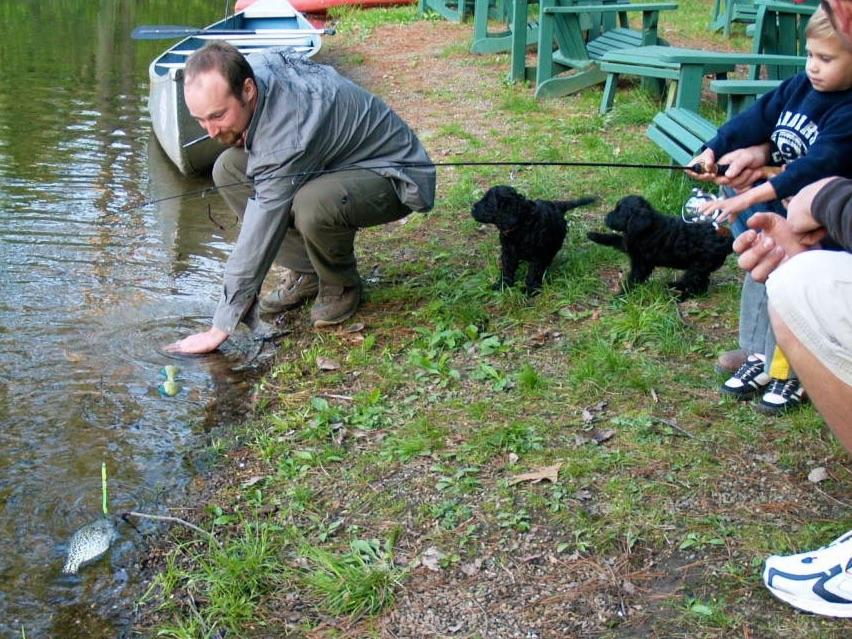 Sea dog kennels portuguese water dog puppies for sale for Water dogs fish