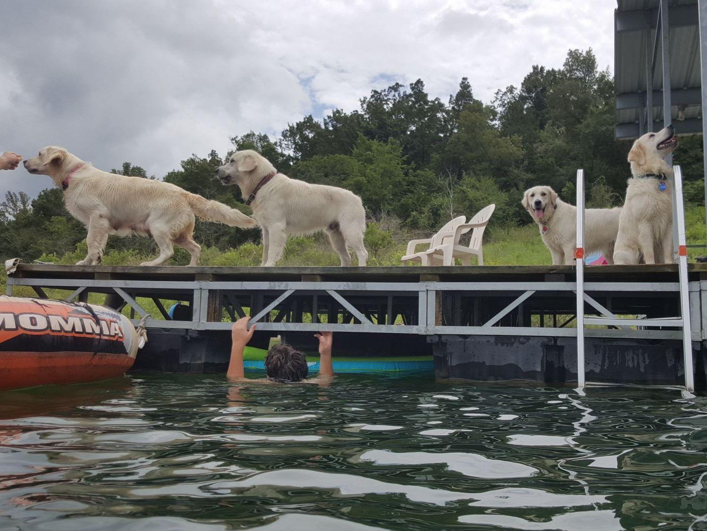 Springfield Mo Dog Training Club