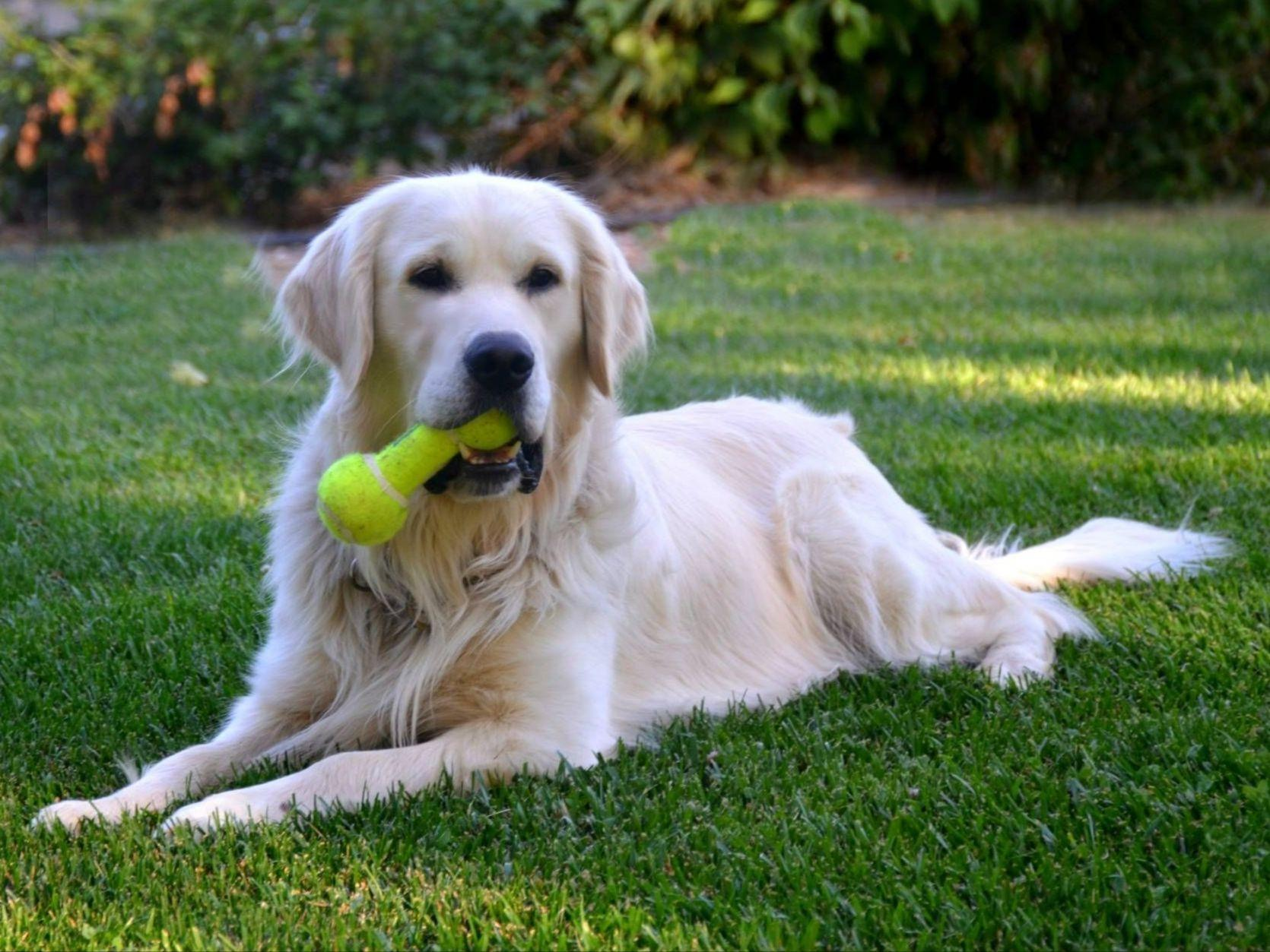 how to become a dog breeder in colorado