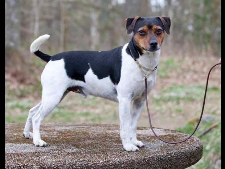 Swedish Farm Dog Rescue
