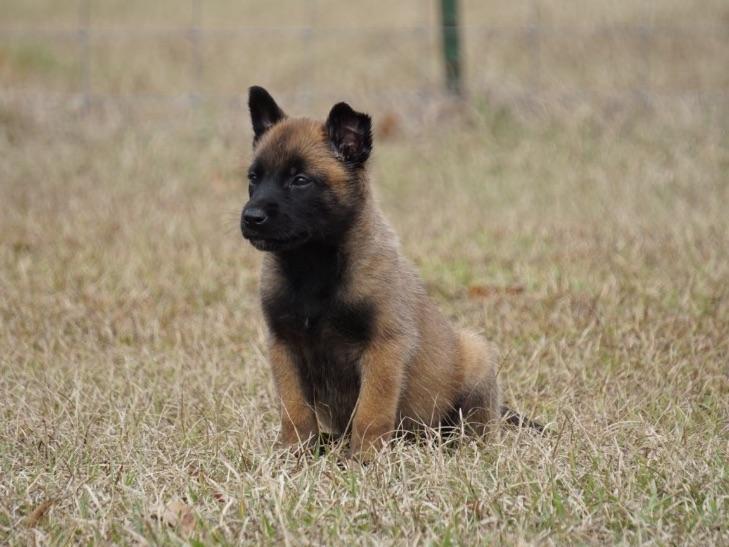 Blackjack puppy