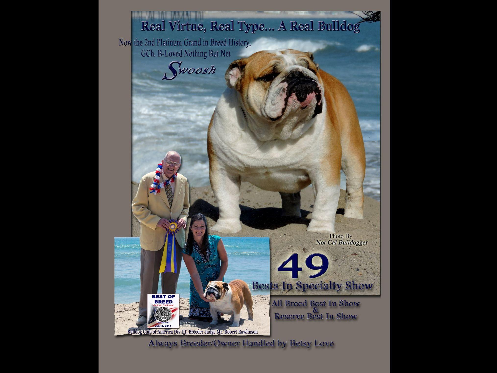 Bulldog Puppies For Sale Akc Marketplace