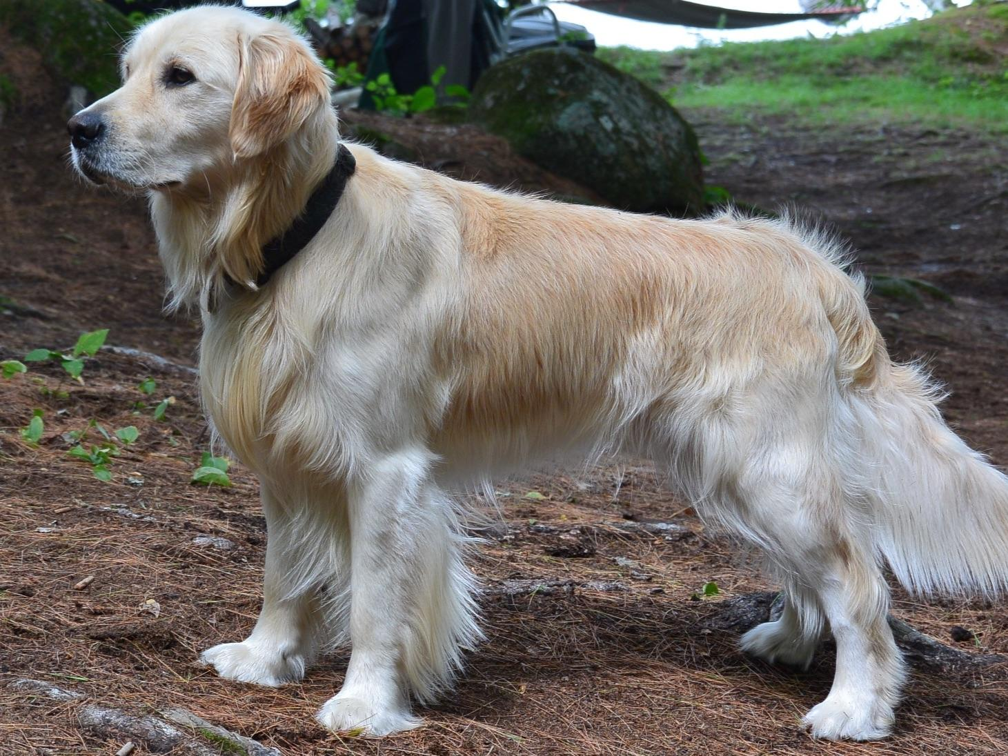 Akc Marketplace American Kennel Club | Autos Post