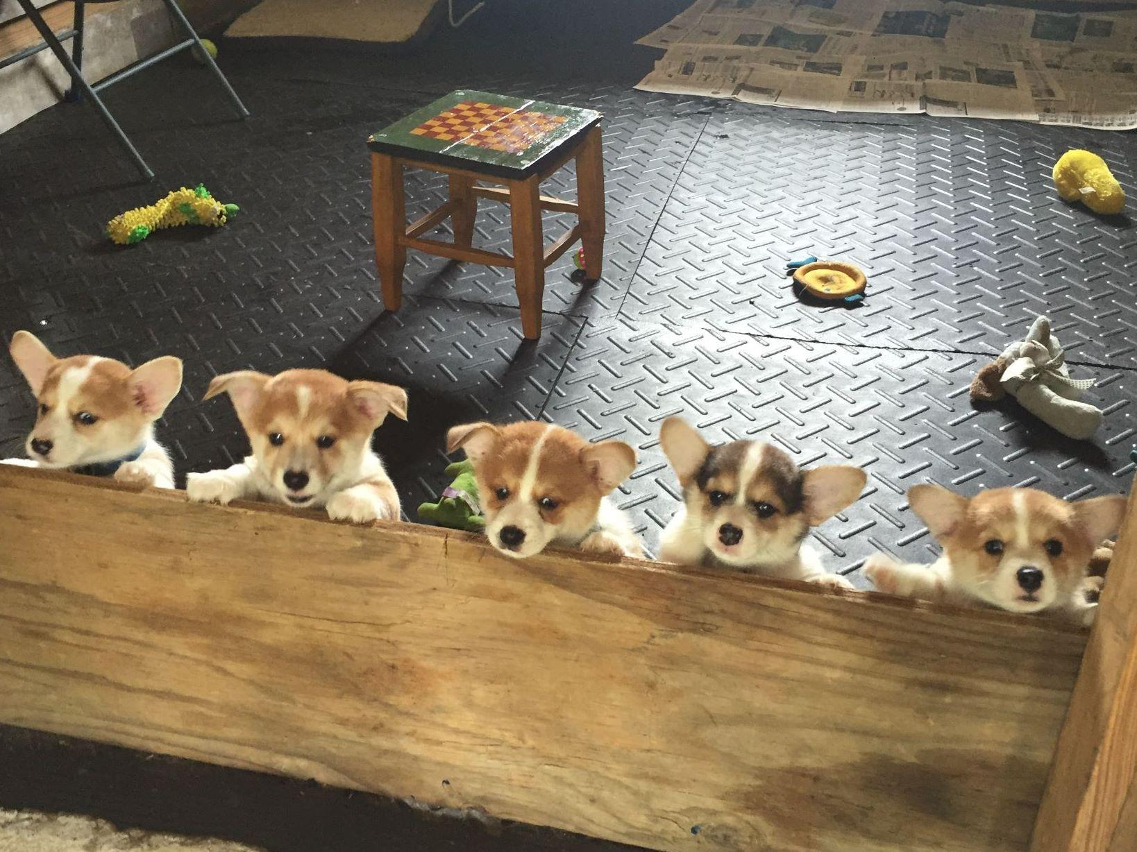 Em And Em Farm - Puppies For Sale