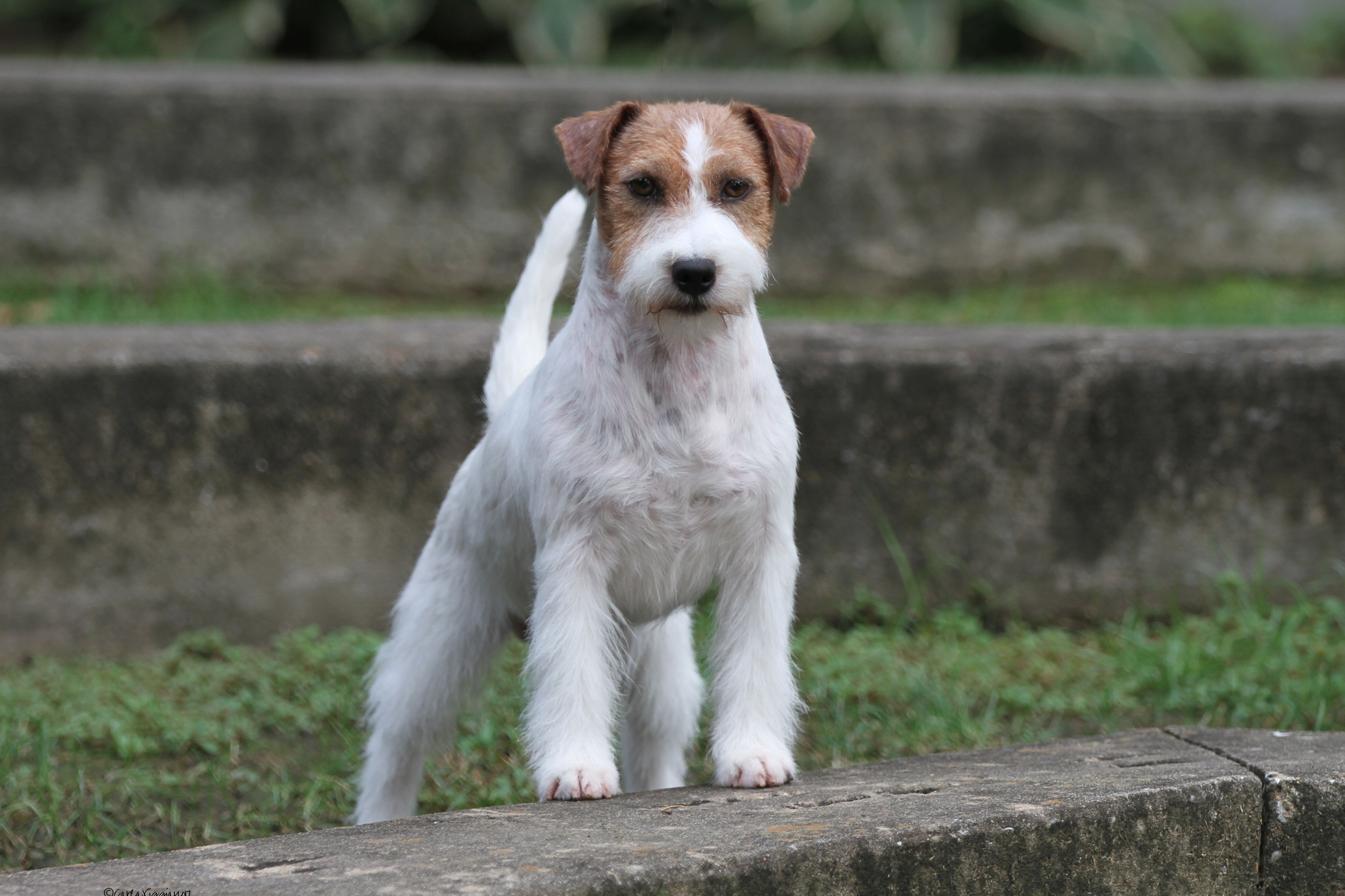 Marlyn Kennel - Puppies For Sale