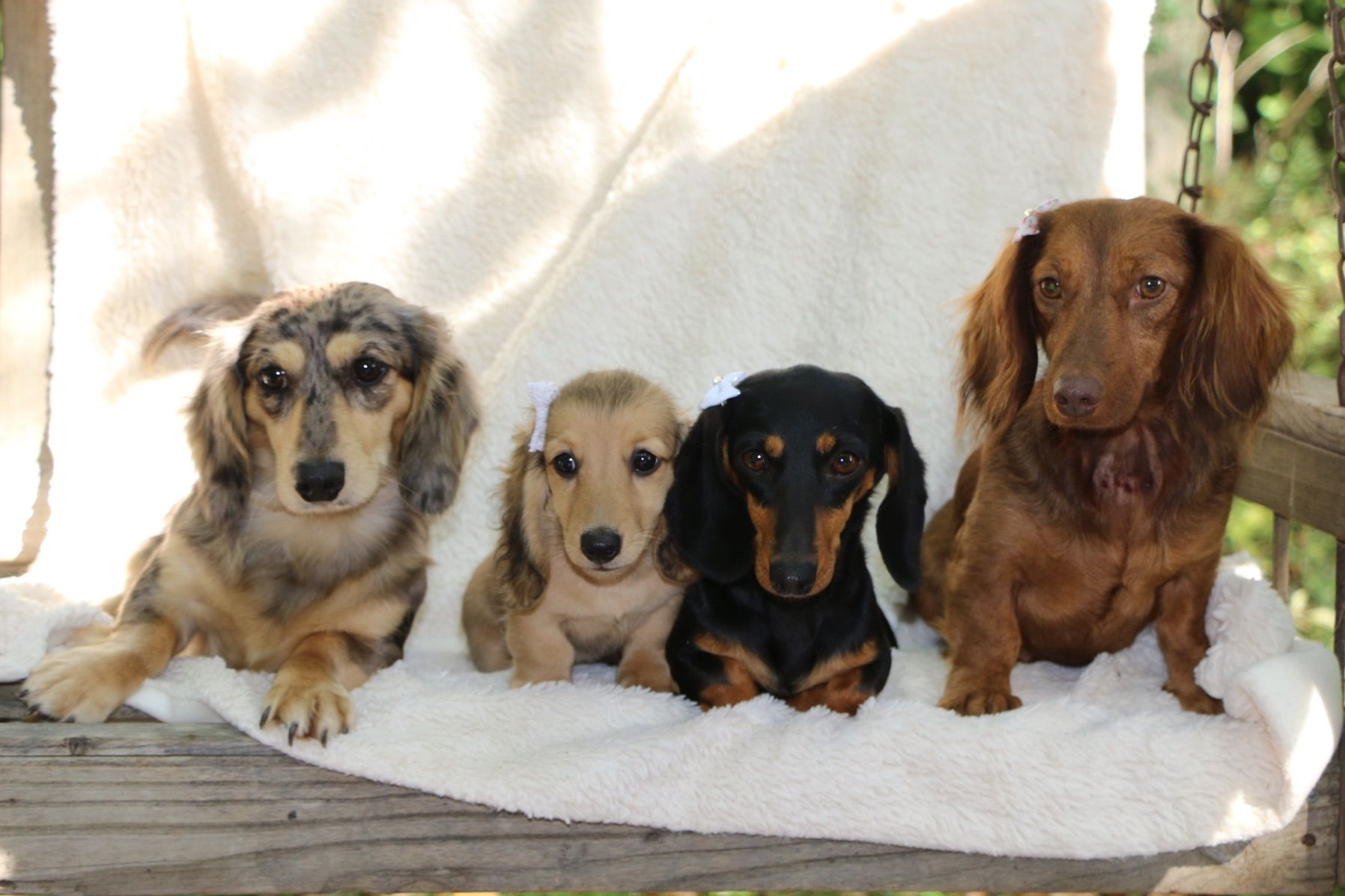 Kathleen Ramer - Puppies For Sale