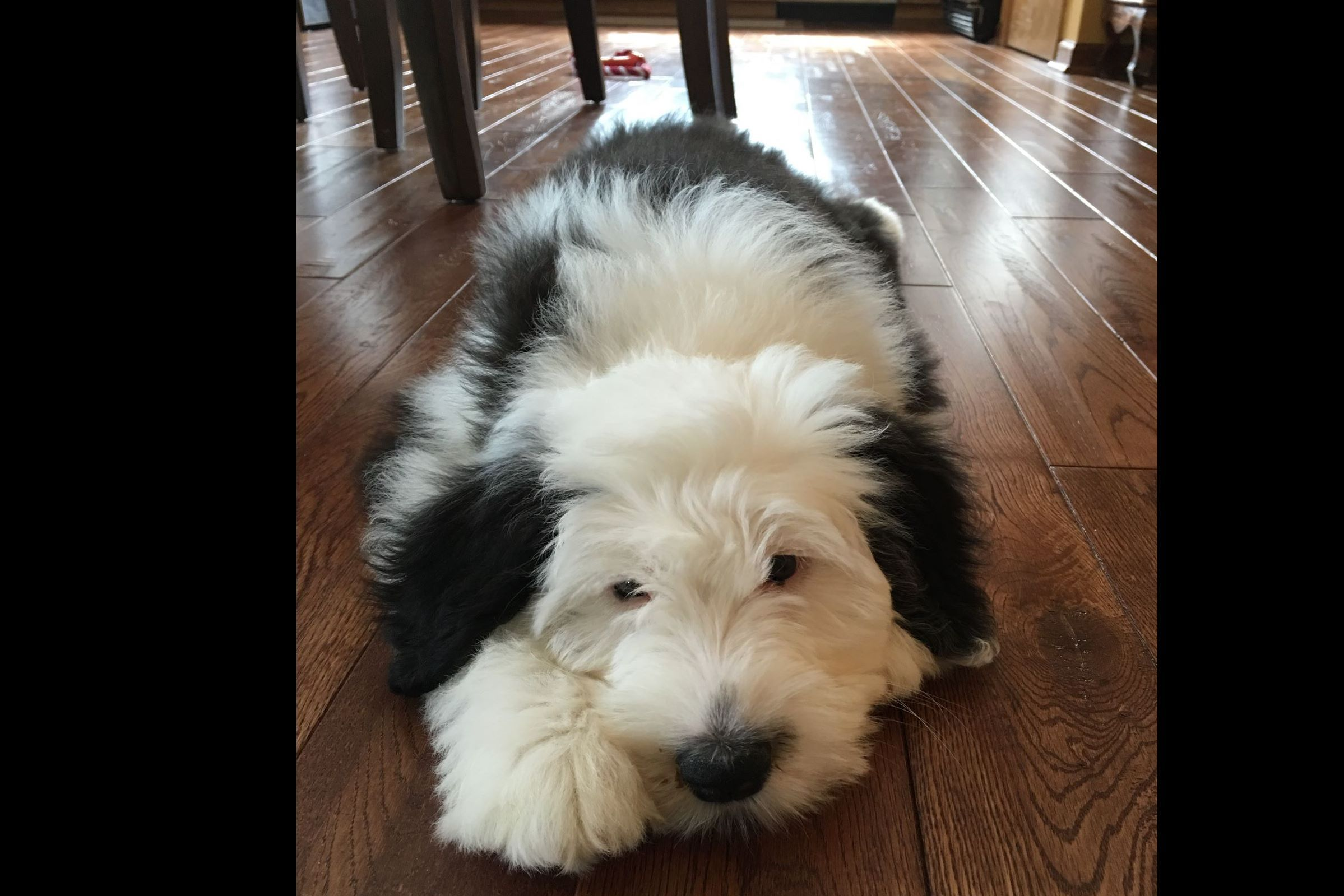 Kelly Smart - Puppies For Sale