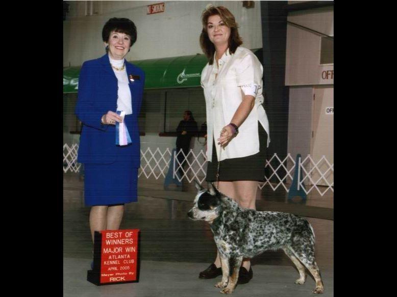 Akc Dog Kennels For Sale