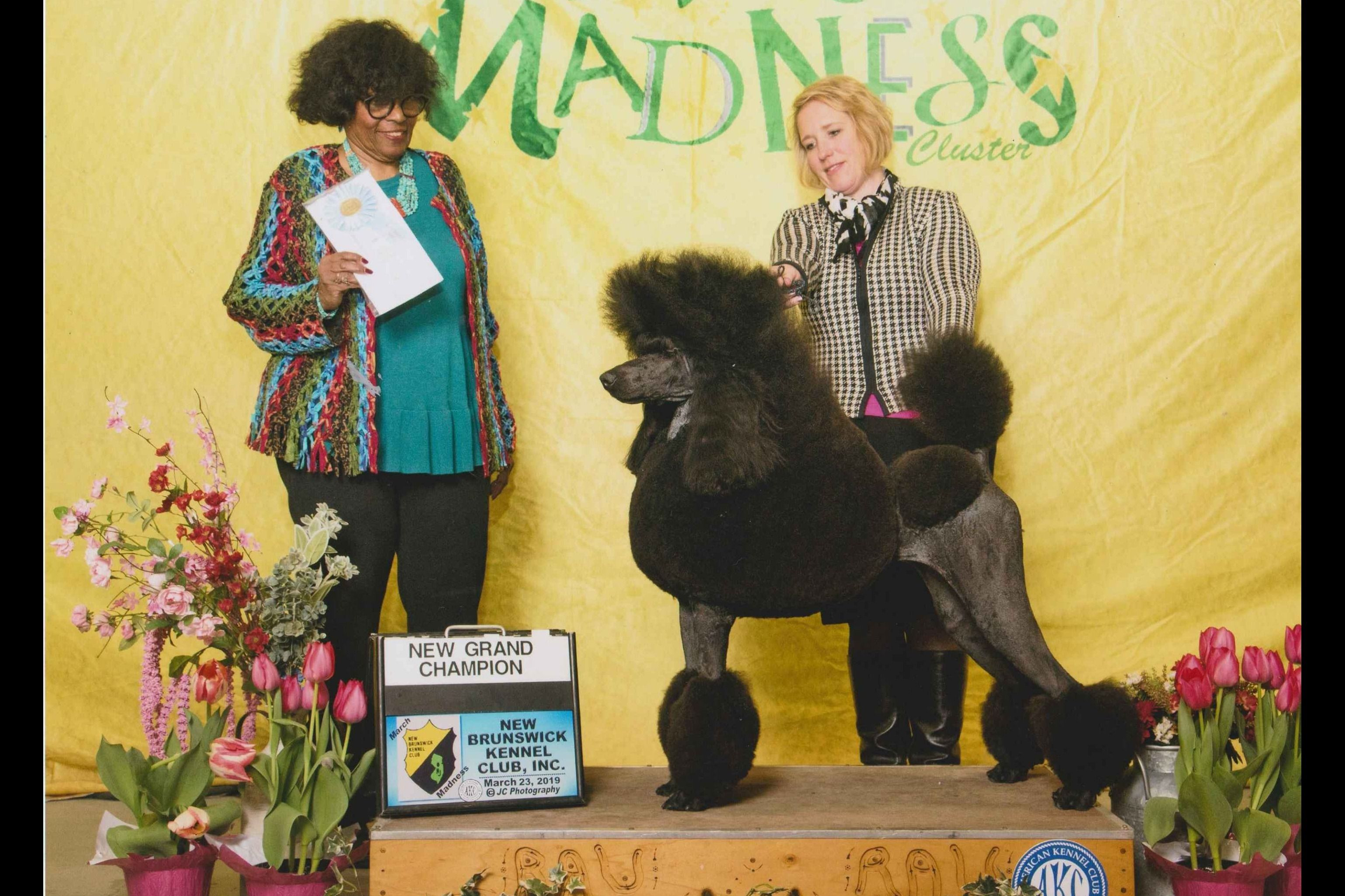 D And D Standard Poodles D And D Bulldogs Puppies For Sale