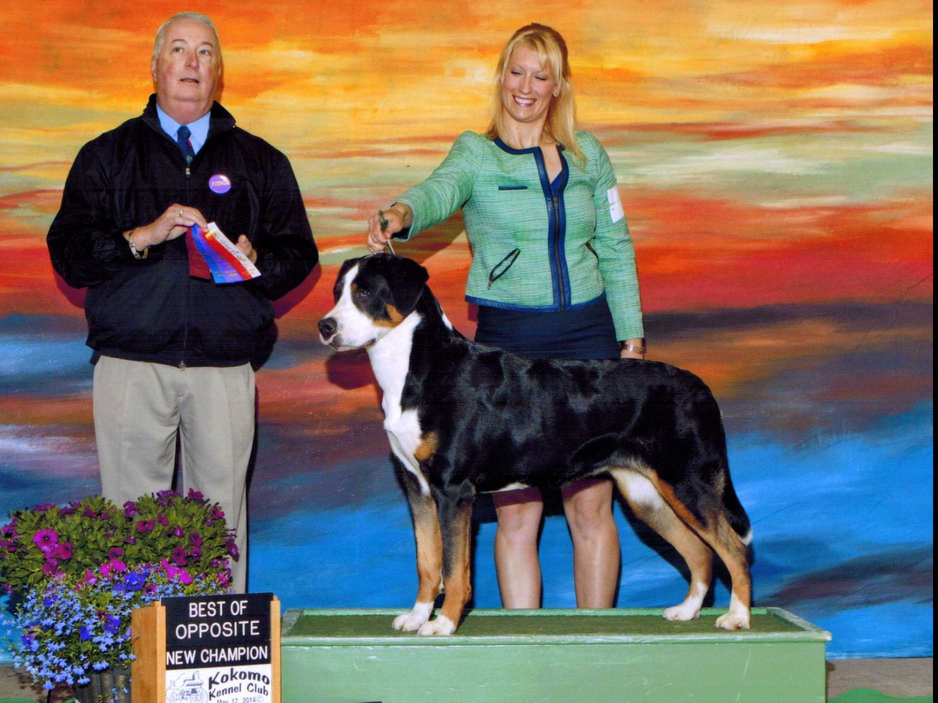 greater swiss mountain dog club of america - HD 1875×1406