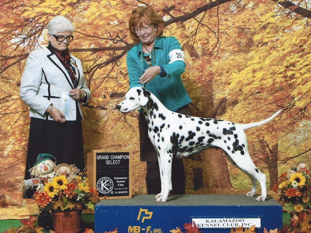 Folkore Dalmatians Puppies For Sale
