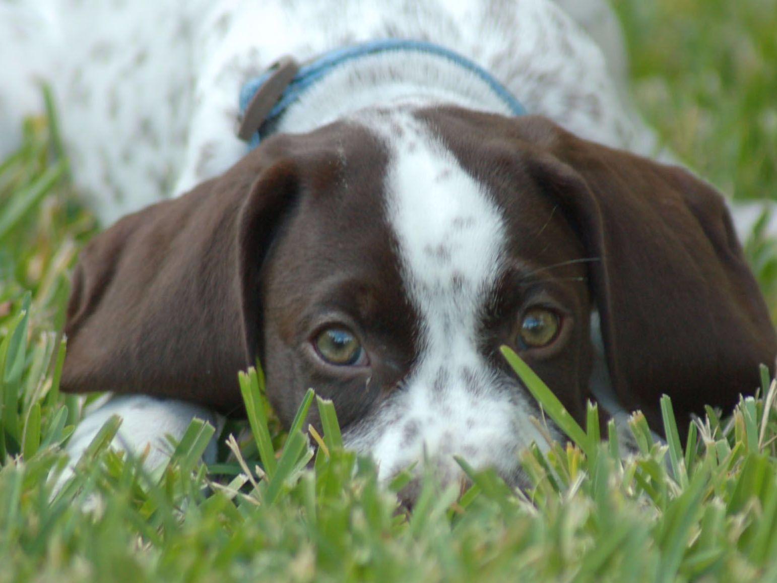 Liebmeister - Puppies For Sale
