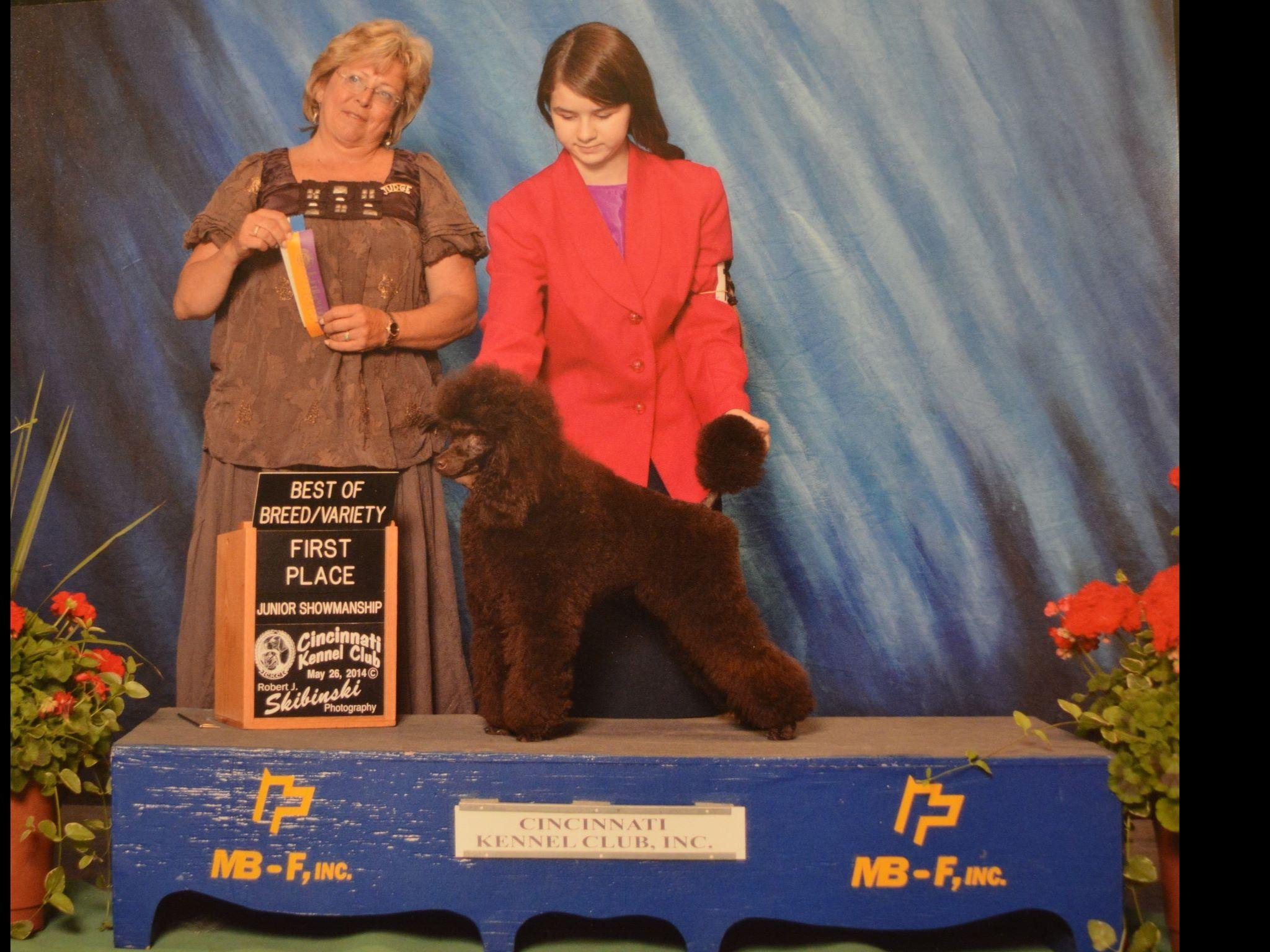 Leavell Poodles Puppies For Sale