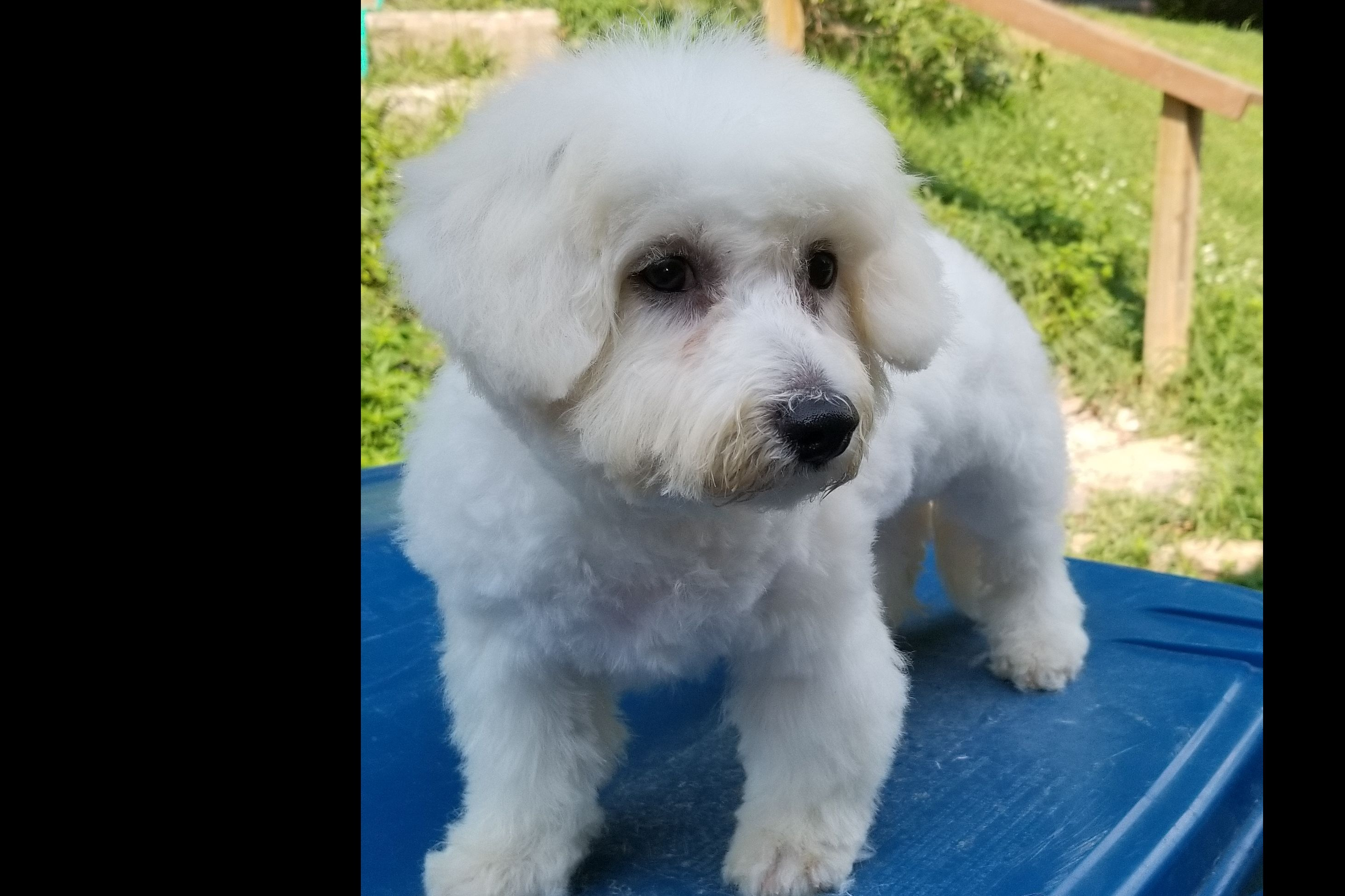 Sir Edwards Of West Tn Puppies For Sale