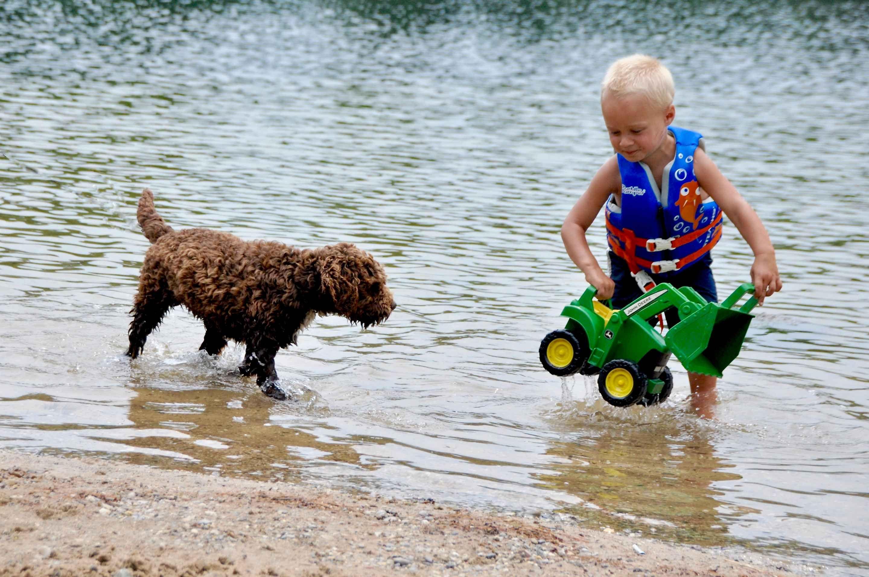 Michigan Lagottos - Puppies For Sale