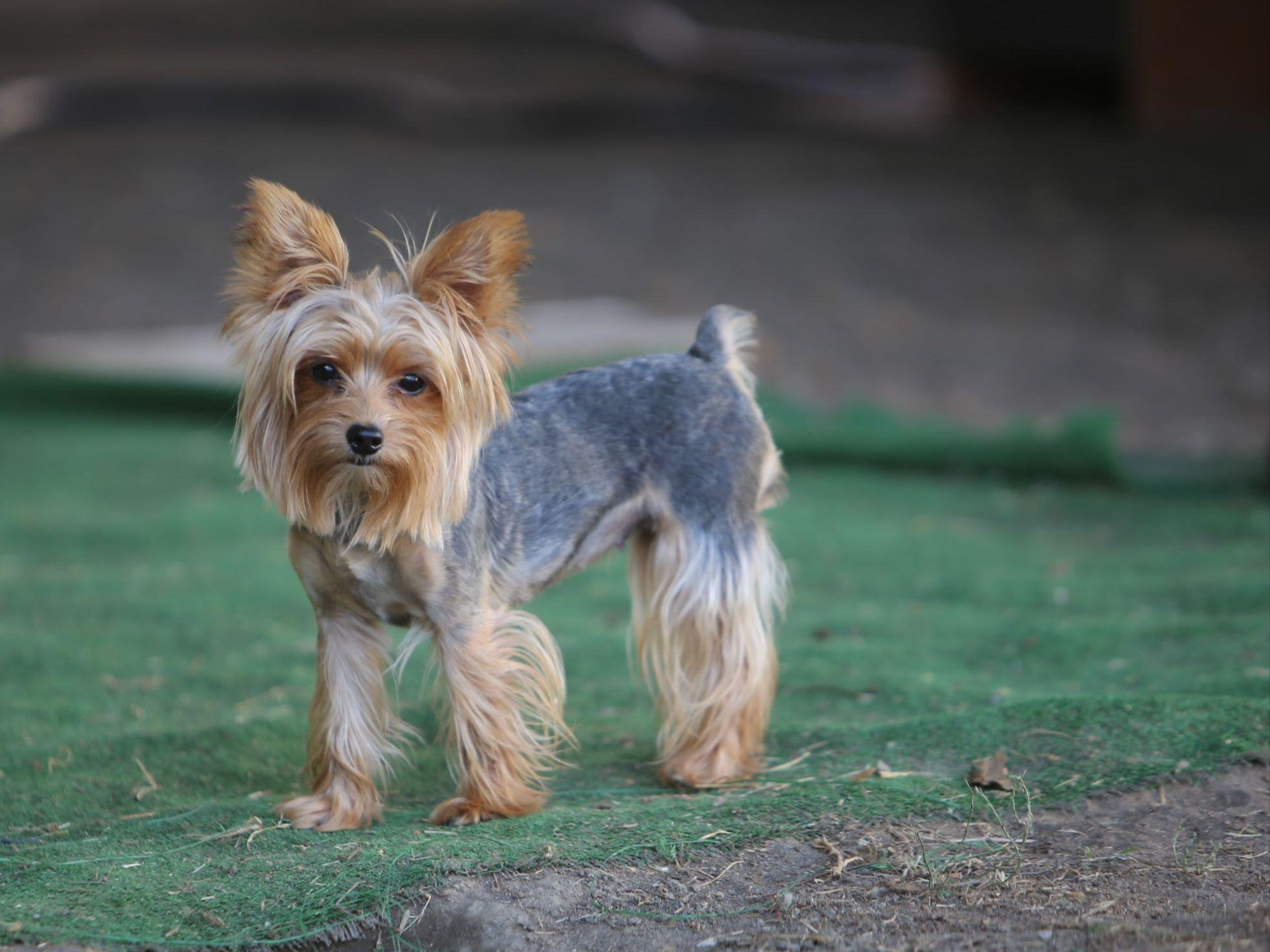 Juan Quinones Puppies For Sale