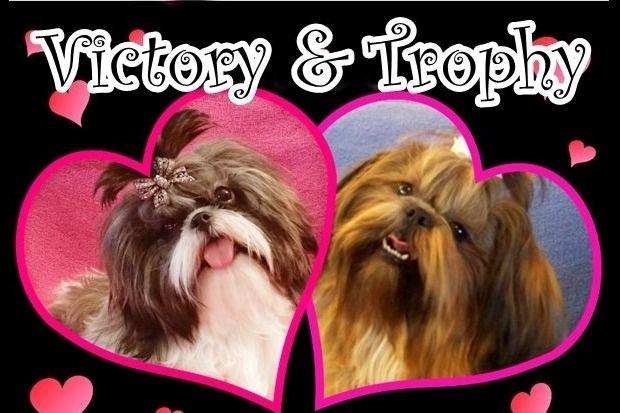 Arizona Shih Tzu - Shih Tzu Puppies For Sale - Born on 11 ...
