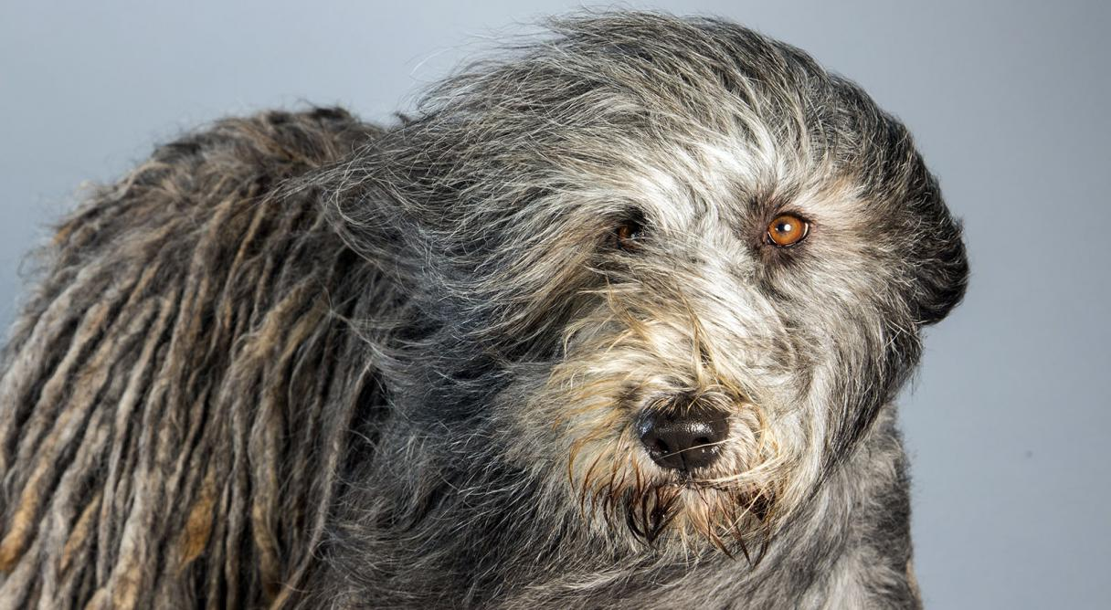AKC Marketplace - American Kennel Club